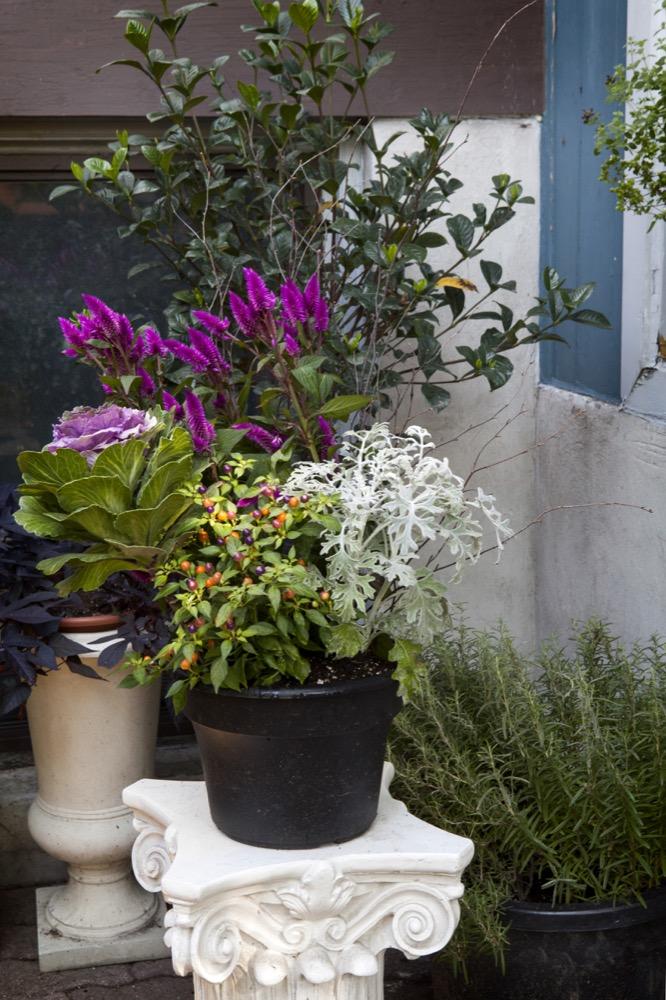 Petals & Oak Toronto floral studio.